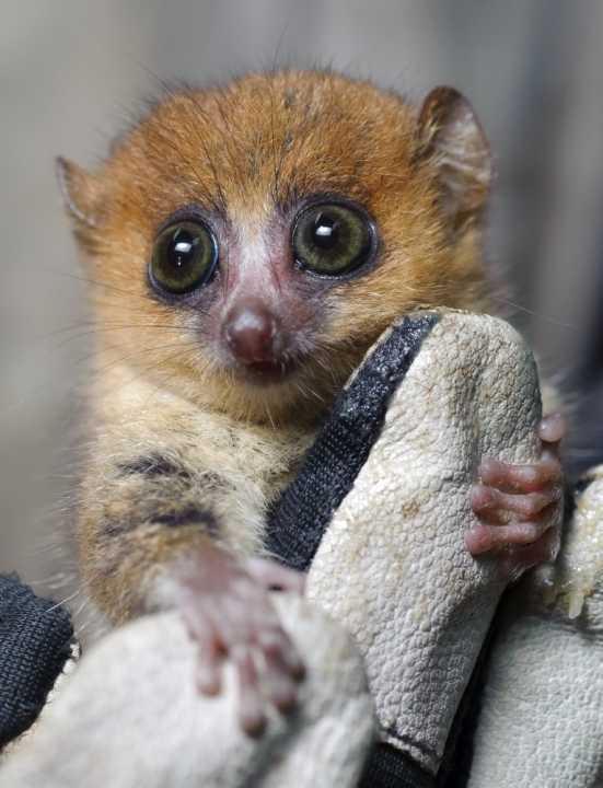 Madagascar: l'isola dei lemuri - Recensione