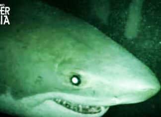 Open Water 3 - Cage Dive: nel trailer italiano gli squali sono affamati