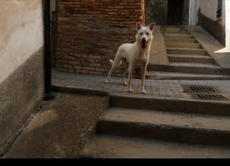 Angelo, vita di un cane di strada
