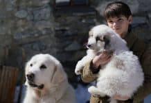Belle & Sebastien - amici per sempre, Cinematographe
