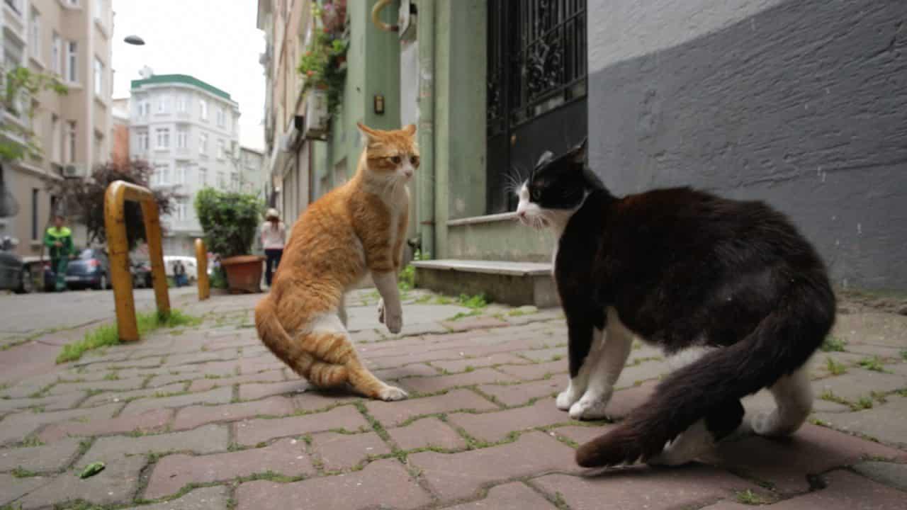 Kedi - La città dei gatti Cinematographe.it