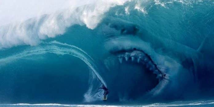 Shark - Il primo squalo, film sugli squali, Cinematographe.it