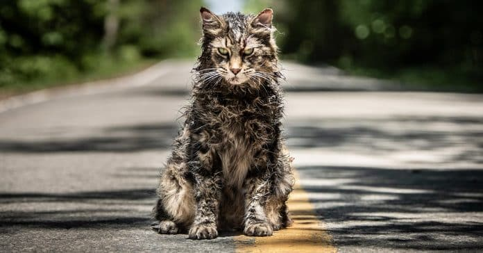 pet sematary cinematographe.it