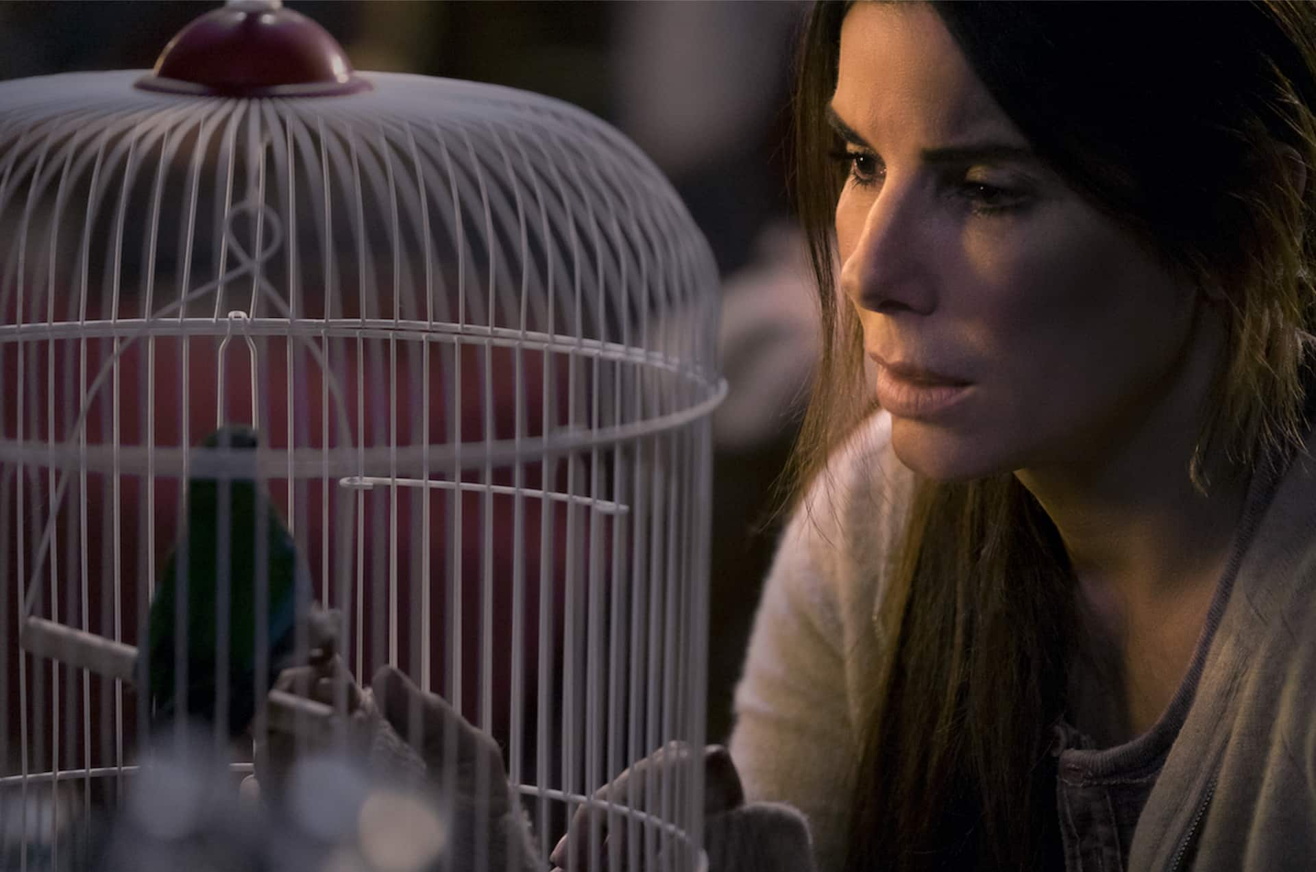 Bird Box Cinematographe.it