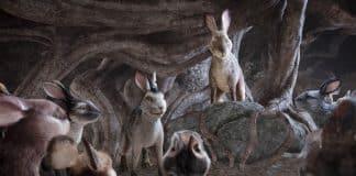 La collina dei conigli cinematographe