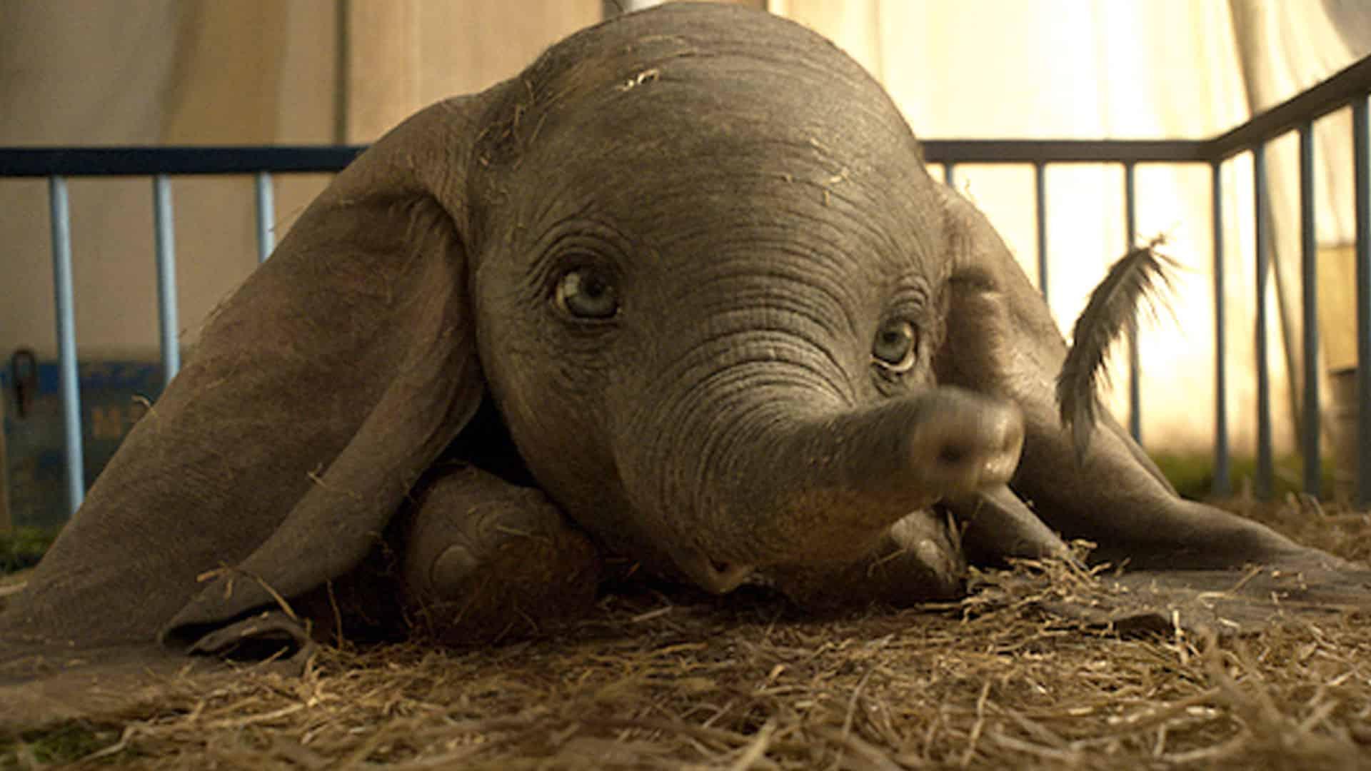 Dumbo la storia vera dietro al film e la leggenda degli elefanti