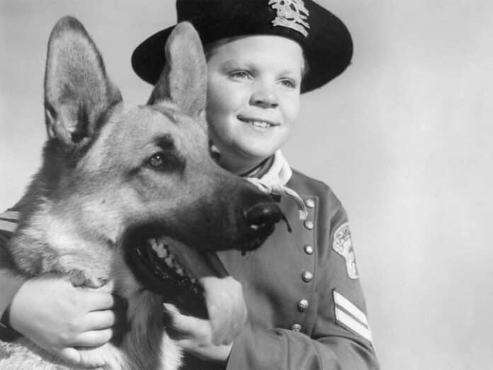 Rin Tin Tin, Cinematographe.it