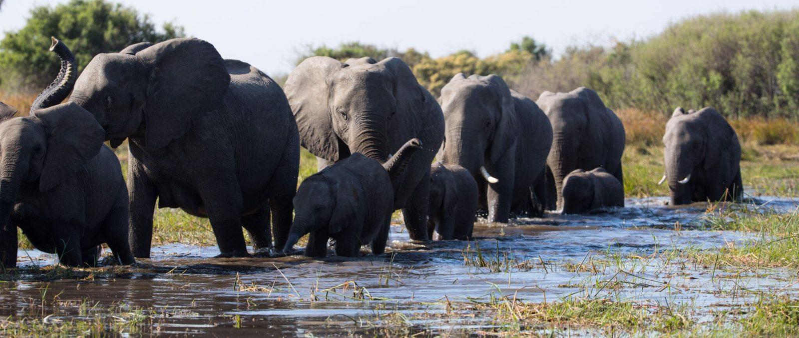 La Famiglia di Elefanti - Cinematographe.it