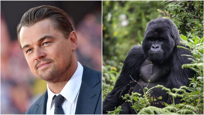 Virunga DiCaprio - Cinematographe.it
