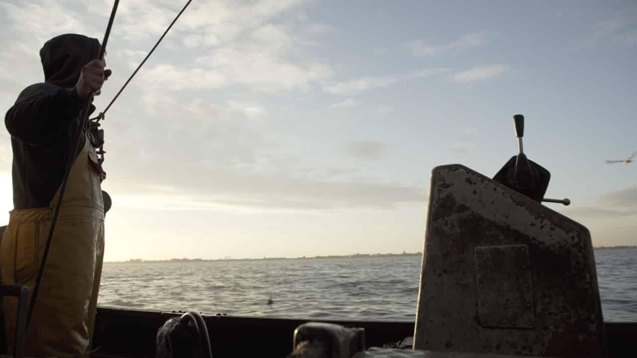 Watt the Fish_pesca elettrica - Cinematographe.it