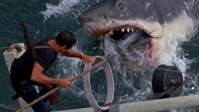 film sugli squali - cinematographe.it