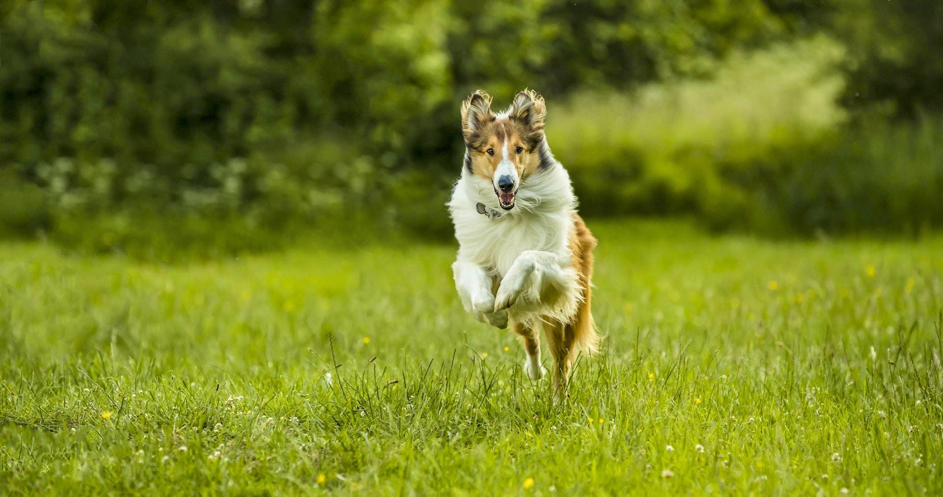Lassie torna a casa Cinematographe.it